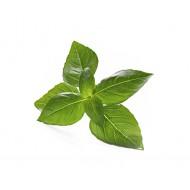 Manjericão-Limão