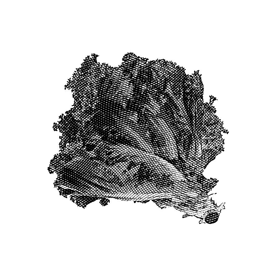 Viveiros Plantidias